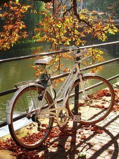 Biking in the autumn