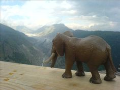 Elephant in the Swiss Alps, via Flickr.