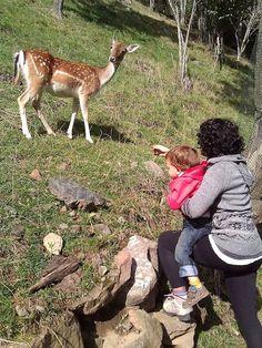 Mollo parc Lugares para ver animales en semi libertad