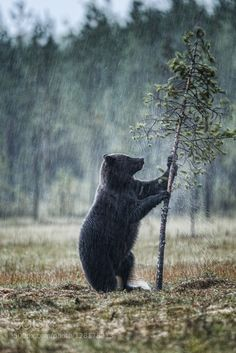 Dancing in the rain #PatrickBorgenMD