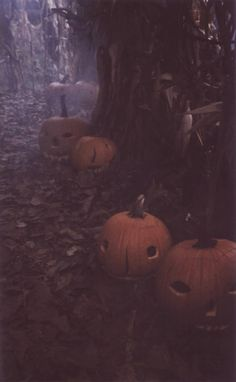 Spooky foggy Halloween path. Follow the eerie Jack o lanterns.