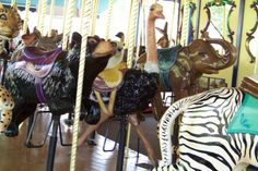 The National Carousel Association promotes conservation,appreciation,knowledge,and enjoyment of carousels and the preservation of complete wooden carousels Asian Elephant, Carousels, Carousel Horses, Treehouse, Black Bear, Central America, Elephants, St Louis, Retirement