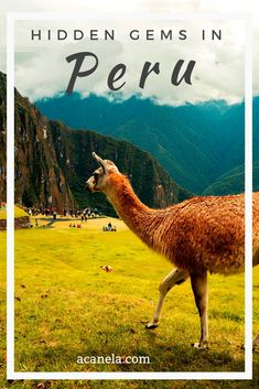Many tourists flock to Peru's most popular wonder, Machu Picchu. This is for good reason, as Machu Picchu is one of the most inspiring and beautiful sites in the world as well as one of the 7 Wonders of the World. However, much of the Northern regions of Hiking Europe, Lake Titicaca, Meet Locals, Peru Travel, Beautiful Sites, Ancient Ruins, Beach Town, Machu Picchu, Travel Around