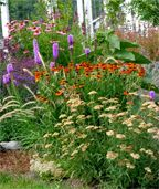Yarrow, Helenium, Liatrus, Echinacea. Good article--lots of plants suggested