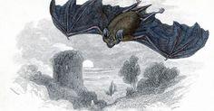 Como se livrar de morcegos empoleirados nos beirais de sua casa. Os morcegos vivem em espaços pequenos e, às vezes, podem acabar se empoleirando em fendas e rachaduras ao redor da casa. Em particular, os morcegos se empoleiram sob o beiral, no espaço entre o telhado e a parede. Você pode querer espantar os morcegos por causa de seus excrementos e do barulho que fazem, além do risco de raiva. No entanto, se você ...