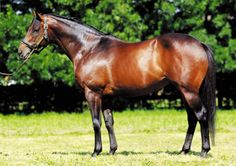 Myboycharlie (IRE) 2005 B.h. (Danetime (IRE)-Dulceata (IRE) by Rousillon (USA) 1st Prix Morny (FR-G1) Standing at Haras du Mezeray, France, & Vinery Stud (NSW), Australia