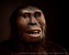 This is a reconstruction of Lucy, a 3.2 million year old Australopithecus afarensis. She represents one of our earliest evolutionary ancestors. She has a combination of human and gorilla-like traits, had a brain the size a third the size of a modern human's, and regularly walked standing up. She probably didn't maker her own tools, but used implements she found in nature. She probably lived in a small troupe with her family and friends, traveling from place to place to find food.