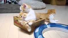 Kittens!!!