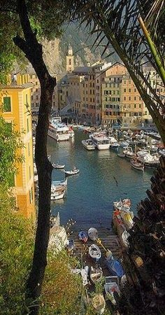 #Camogli ~ Liguria, Italy - Bikes and Boats in Summer - Bussines and Marketing: I´m looking forward for a new opportunity about my degrees dinamitamortales@ gmail.com