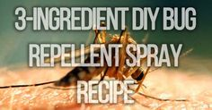 When spring arrives so do those annoying mosquitoes. Instead of going the chemical route, here is a collection of mosquito repelling plants to make mosquit