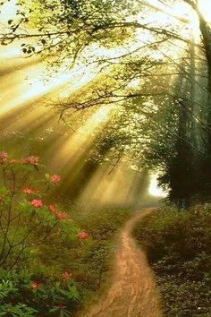 The most beautiful Nature Wallpapers of the World: Streaming Sunbeams Beautiful World, Beautiful Places, Beautiful Dream, Beautiful Lights, Beautiful Scenery, Dream Big, Forest Path, Forest Mural, Forest Light