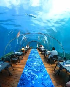 Underwater Hotel, Underwater Restaurant, Vacation Destinations, Dream Vacations, Maldives Vacation, Beautiful Places, Beautiful Pictures, Beautiful Hotels, Budget Holidays