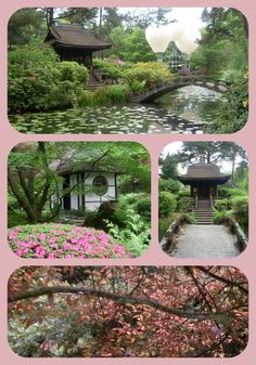 Japanese Garden at Tatton Park... just beautiful!