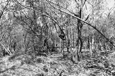 Bosque, selva tropical seca. Iguana Nicaragua