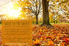 Walk in the Woods diffuser blend ~ diffusing