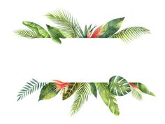 Watercolor banner fruit orange branch isolated on white background. Watercolor banner tropical leaves and branches isolated on white background. watercolor banner tropical leaves and branches isola Tropical Frames, Tropical Flowers, Summer Flowers, Tropical Background, Leaf Background, Background Banner, Framed Wallpaper, Iphone Wallpaper, Hawaiian Flower Tattoos