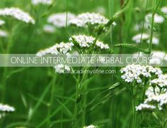 online herbal course - learn herbalism online!