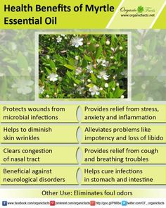 Lemon Myrtle essential oil ○ uses and benefits Myrtle Essential Oil, Essential Oils For Colds, Essential Oil Uses, Young Living Essential Oils, Oil Benefits, Health Benefits, Moringa Benefits, Young Living Oils, Aromatherapy Oils