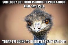 Self Encouragement Emu