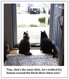 Cat perspectives...