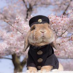 * Sakura season officially starts in Tokyo as cherry blossoms begin blooming in the capital. I can't wait for Cherry Blossom peak bloom. 🌸🌸 photo: last year * 今日、東京で桜の開花宣言があったぉ🌸 ぼくの第2ボタンはキミのためにとってあるぉ🌸 * * #ぷいぷい先輩 #senpai #学帽には東大の銀杏バッジ