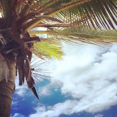 Vendredi  le week-end est là ( enfin ce soir pour moi lol ) #landscape #latergram #paysage #cloud #nuages #bluesky #sky #beautiful #coconuttree #cocotier #lareunion #iledelareunion #reunionisland #islandlife #weare974 #team974 #gotoreunion #gotowork #goodday #bonnejournée #weekend #islandgirl #tropical #sun #soleil #paradise #igersreunion #instalike #instagrammers by fab__ie