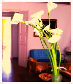Sono arrivate dei bellissimi #fiori a Ca' del Sol: le Calle :)