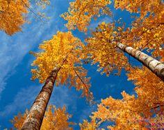 25 Scenic Autumn Desktop Wallpapers