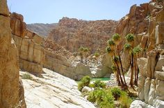 Explore Cataviña Baja California., México! This is Poza la Escuadra in the Santa Maria Oasis, a natural pool located in a enormous granite canyon! Are you ready for you #BajaCalifornia adventure?  Learn more by visiting www.discoverbajacalifornia.com  -Adventure by Nathan Velasco #mexico #baja #explore #vacation #outdoor #nature