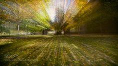 Autumn's Peak C Autumn in full swing abstract (ish) double exposure. The way I see it
