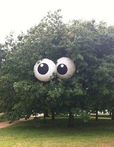 Decorate beach ball as eyes - put on the tree for Halloween