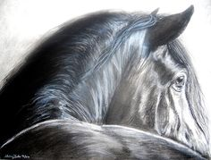 Black Horse Drawing in Charcoal