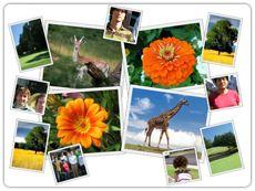 Fotokoláže online - zábava s fotkami online