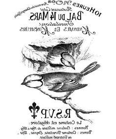 Beautiful bird graphic