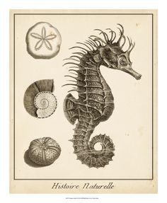 Seahorse Study II