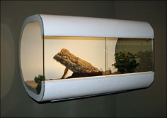 A second DIY enclosure from BertS on the Reptile Forums Uk.