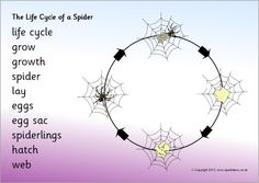 Life cycle of a spider word mat (SB9468) - SparkleBox