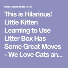This is Hilarious! Little Kitten Learning to Use Litter Box Has Some Great Moves - We Love Cats and Kittens