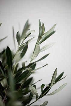 Flower Phone Wallpaper, Plant Wallpaper, Wallpaper Backgrounds, Iphone Wallpaper, Plant Aesthetic, Nature Aesthetic, White Aesthetic, Aesthetic Backgrounds, Aesthetic Wallpapers