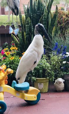 Stork Bird, Parrot, Animals, Parrot Bird, Animales, Animaux, Animal, Animais, Parrots