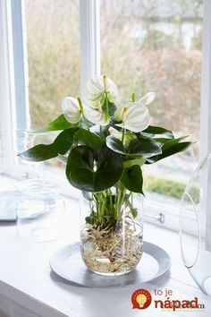 Hydroponic plants, Plants, Water plants indoor, Plants grown in water, Indoor wa. Hydroponic Farming, Hydroponic Growing, Hydroponic Gardening, Container Gardening, Organic Gardening, Hydroponic Tomatoes, Vertical Hydroponics, Hydroponics System, Urban Gardening
