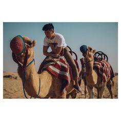 ▷ @xxdaniel - xxdaniel - Instagram Posts, Albums and Videos... Albums, Camel, Fan, Videos, Instagram Posts, Animals, Animales, Animaux, Camels