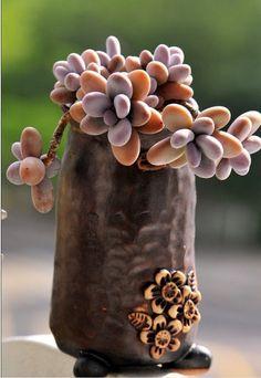 Rare succulents!
