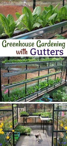 Gardening with Gutters, Gutter Gardening, Greenhouse Garden, Growing Vegetables in a Greenhouse, Gardening