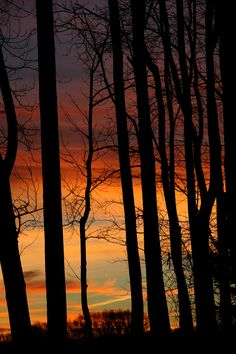 The sunrise is seen through barren trees that make up the Wexford landscape on Wednesday, December 5, 2012. Philip G. Pavely | Tribune-Review