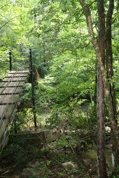 Savage Gulf hike- Tennessee. Call the Visitor's Center for more information, 931-924-2980.