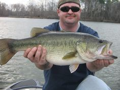 Fishing Guides - David Messenger's 11 lb Bass in Guntersville