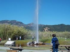 """Old Faithful Geyser of California. Like its more famous Yellowstone counterpart, this Napa Valley geyser erupts at regular intervals - every forty minutes. A visitor writes, """"The geyser erupts every 10 minutes, and while small, it is still a unique experience."""" The geyser is a few miles north of Calistoga and has tables for a picnic with a small gift shop."""