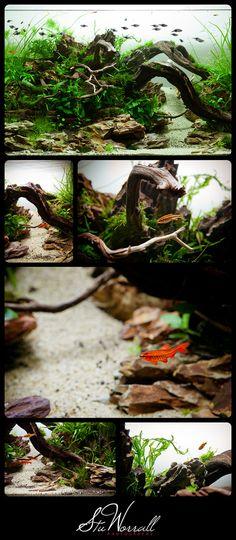 90x45x45cm Aquascape Collage | Flickr - Photo Sharing!