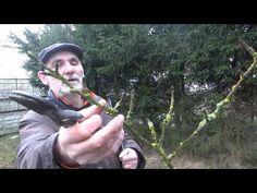 Jak przyciąć młode drzewka owocowe? #zielonepogotowie - YouTube